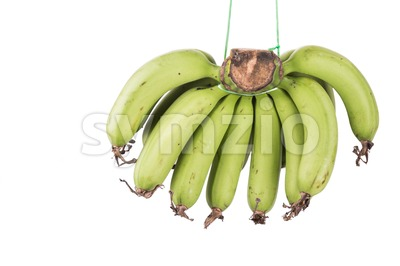 Bunch of sweet organic yellow banana hanging with string Stock Photo