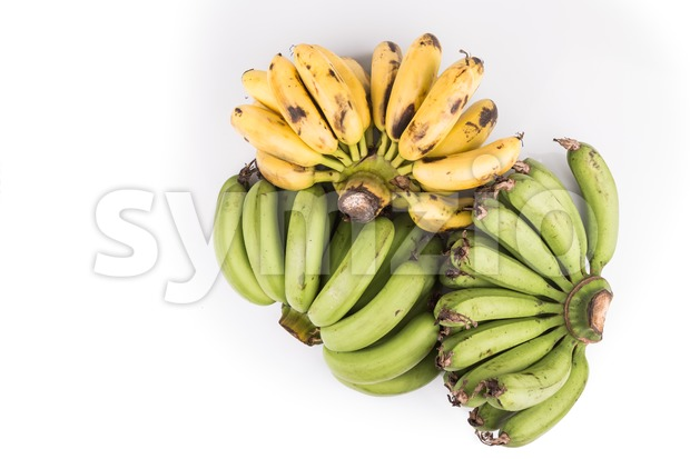 Three bunches of sweet and juicy organic green and yellow banana on white background