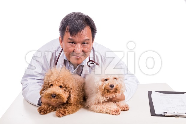 Friendly vet doctor hugging two cute dogs on white background Stock Photo
