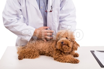 Veterinary doctor vaccinating puppy dog on white background Stock Photo