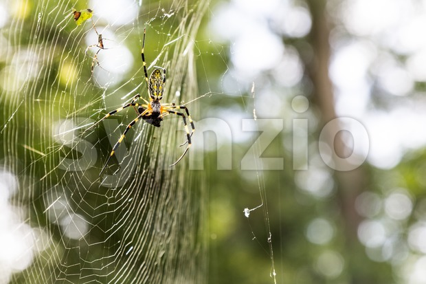 Spider with prey on web in nature Stock Photo