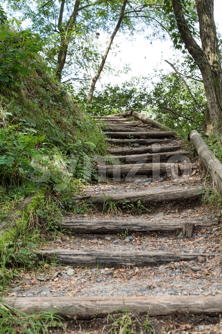 Nature path with steps in serene shady forest