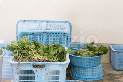 Freshly harvested Japanese wasabi plant stem and roots with leafs Stock Photo