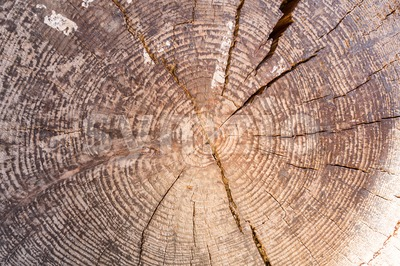 Closeup of cross section of tree trunk with rings Stock Photo