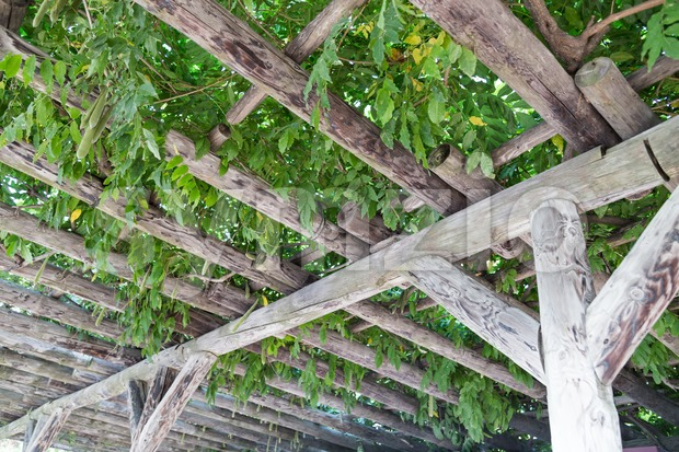 Serene wooden pergola with foliage and leafs Stock Photo