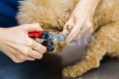 Vet trim cut dog nails at clinic Stock Photo