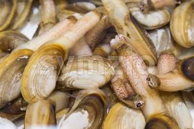 Shellfish such as clams are allergic to some people Stock Photo