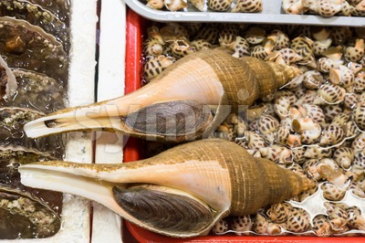 Heap of live sea snails in market, delicacy among Chinese Stock Photo