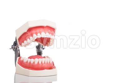 Dentist orthodontic teeth model with focus on lower teeth Stock Photo