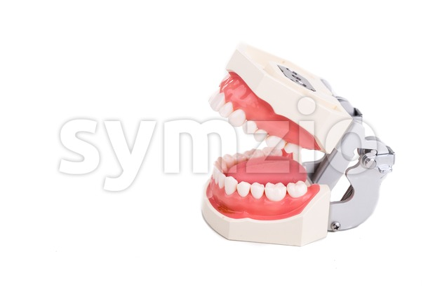 Dentist orthodontic teeth model with focus on side teeth Stock Photo