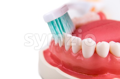 Demonstration on soft and slim tapered bristle toothbrush brushing teeth Stock Photo