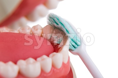 Soft and slim tapered bristle toothbrush brushing in-between teeth Stock Photo