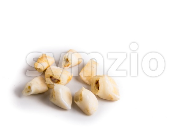 Collection of extracted milk teeth  on white background