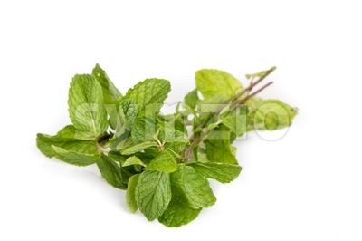 Fresh aromatic peppermint leafs on white background Stock Photo