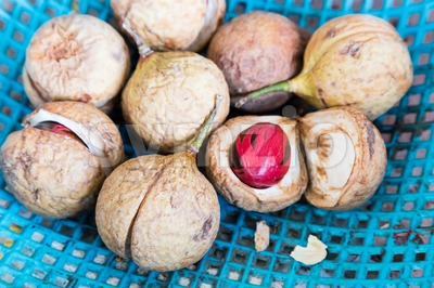 Close-up of fresh nutmeg fruit with mace seed Stock Photo