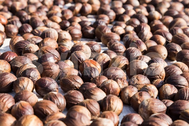 Fresh nutmeg mace seed being dried under the sun Stock Photo
