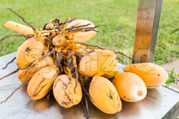 Bunch of fresh yellow young coconut for refreshing drinks Stock Photo