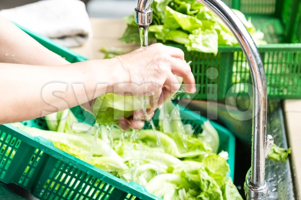 Hand washing leafy green vegetable with running water in household sink to rid pesticides