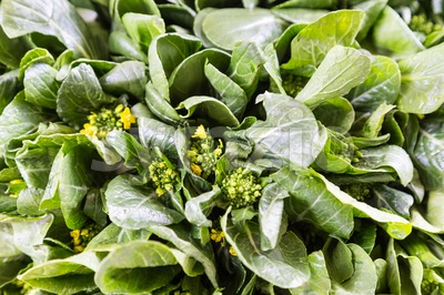 Close-up of healthy organic choy sum leafy vegetable Stock Photo
