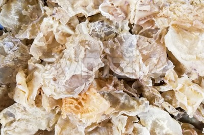 Dried fish maw or bladder, a delicacy in Chinese cuisine Stock Photo