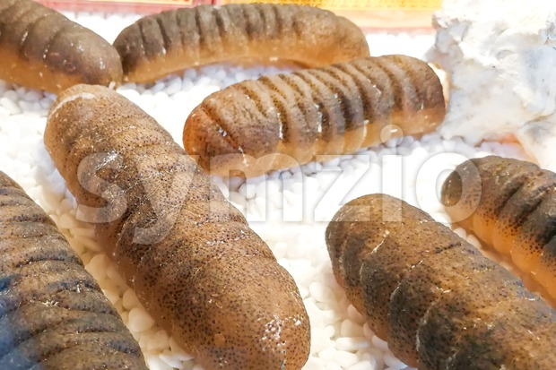 Dried sea cucumber, a delicacy in Chinese cuisine Stock Photo