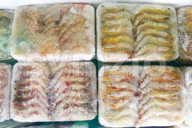 Frozen prawns shrimps in ice bag to preserve freshness Stock Photo
