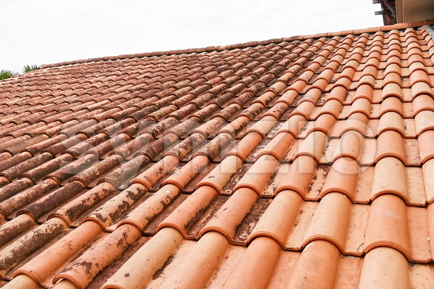 Moldy roof tiles in humid tropical climate Stock Photo