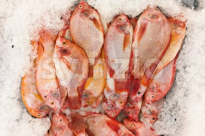 Red tilapia snapper fish on ice for sale in market Stock Photo