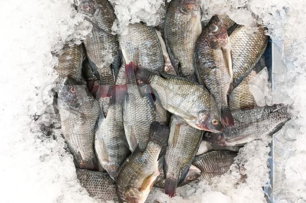 Black tilapia snapper fish on ice for sale in market Stock Photo