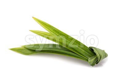 Pandan leaf, fragrant leaf used as ingredient in Asian cooking Stock Photo