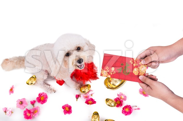 Giving red envelop with Good Luck word to dog Stock Photo
