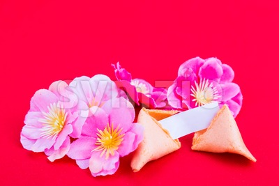Fortune cookies with plum blossom flowers on red background Stock Photo
