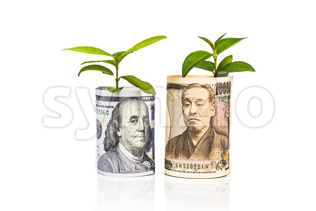 Concept of currency growth rate and performance between USD and Japanese Yen with green plant as analogy