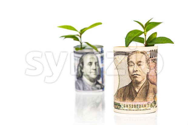 Focus on Japanese Yen conceptual growth and performance ahead of US Dollar with green plant as analogy