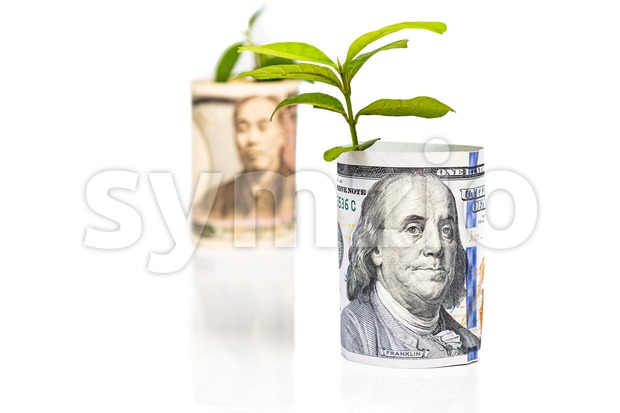 Focus on US Dollar with conceptual growth and performance ahead of Japanese Yen with green plant as analogy