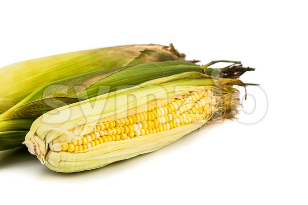 Sweet and natural crystal corn variety with white background. Stock Photo