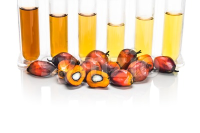 Oil palm biofuel biodiesel with test tubes on white background. Stock Photo