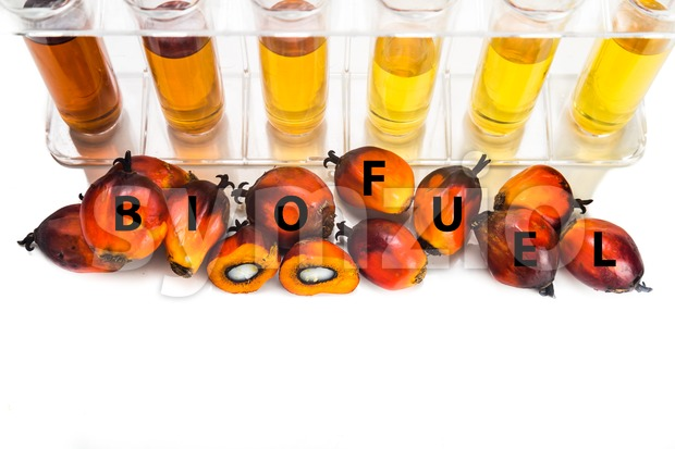Oil palm biodiesel with test tubes and the word BIOFUEL.