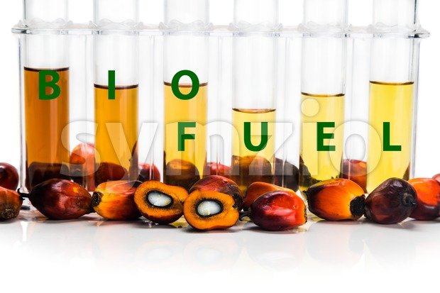 Oil palm derived biodiesel in test tubes and BIOFUEL word Stock Photo