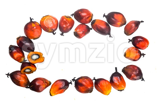 Freshly harvested oil palm fruits arranged in circle on white. Stock Photo