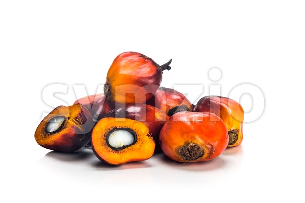 Heaps of freshly harvested oil palm fruits on white background