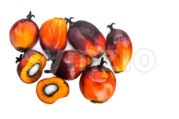 Heaps of freshly harvested oil palm fruits on white background. Stock Photo