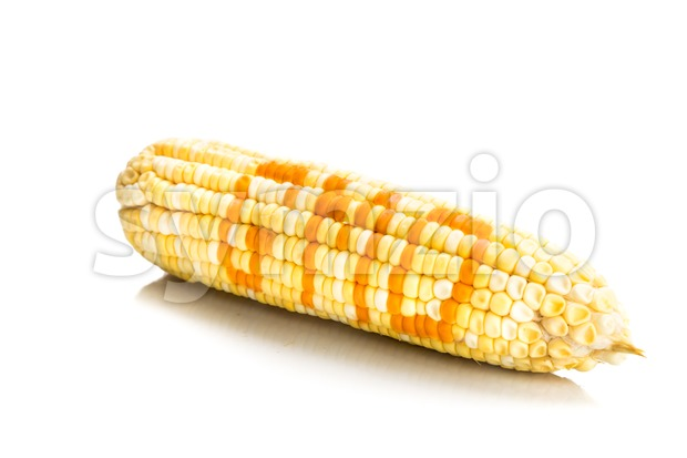 Concept of corn maize with GMO on corn seeds kernels Stock Photo
