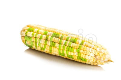 Concept of corn maize with BIOFUEL on corn seeds kernels Stock Photo