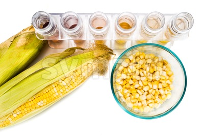 Corn generated ethanol biofuel with test tubes on white background. Stock Photo