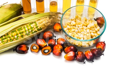 Corn and Oil Palm generated ethanol in test tubes, with BIOFUEL on maize Stock Photo