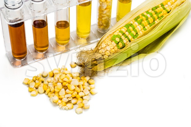 Corn generated ethanol in test tubes, with BIOFUEL on maize Stock Photo
