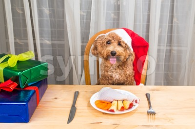 Concept of excited dog on Santa hat having delicious raw meat Christmas meal on table. Stock Photo