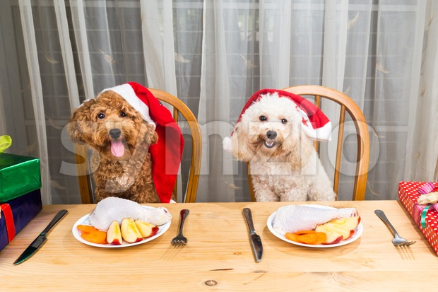 Concept of excited dogs on Santa hat having delicious raw meat Christmas meal on table