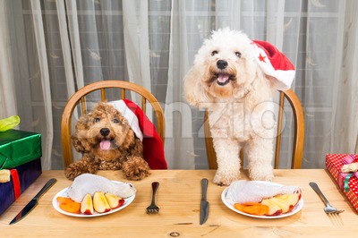Concept of excited dogs on Santa hat having delicious raw meat Christmas meal on table. Stock Photo